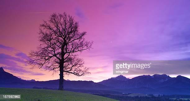 old bavarian oak- allgau - germany