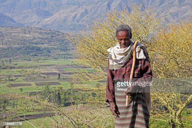 Old black herdsman herding cattle in the mountains, Lasta Amhara Region, Ethiopia, Africa.