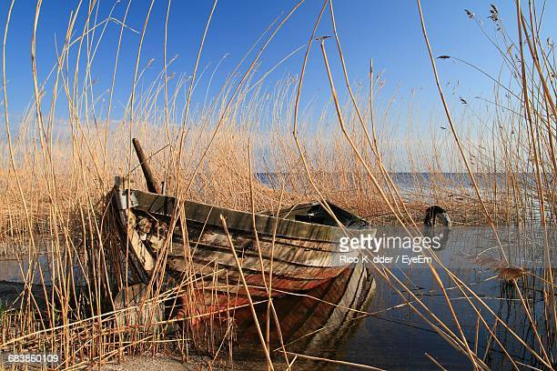 Old Boat In Reeds