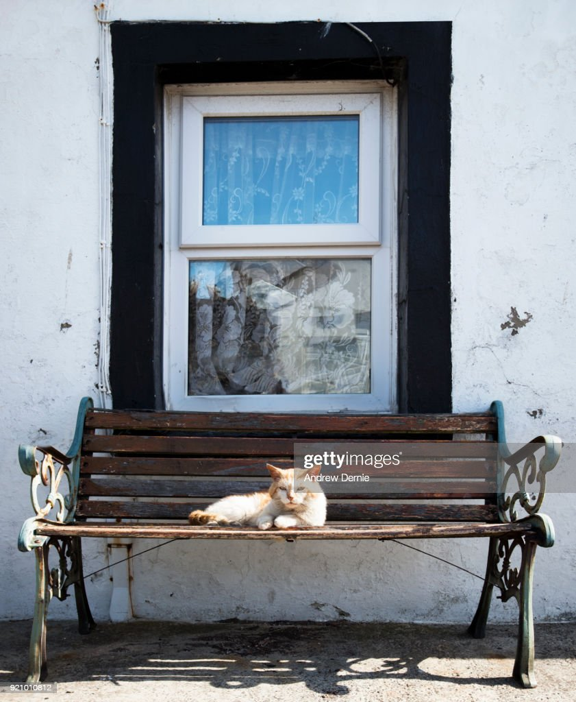 Old Cat : Stock Photo