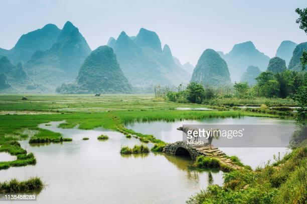 vieux fermier chinois avec le buffle d'eau contre le champ de riz - chine photos et images de collection