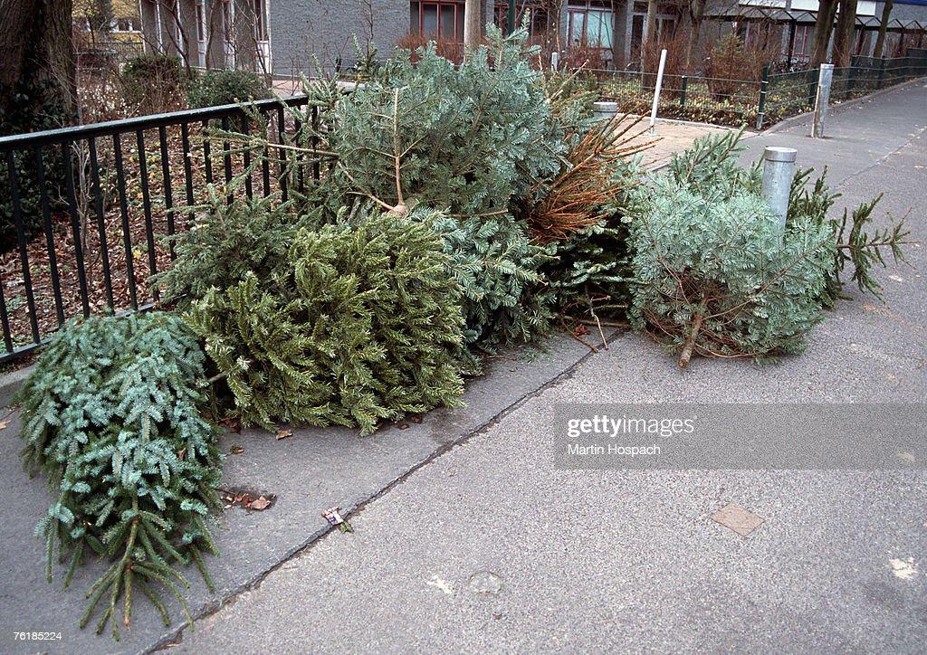 Old Christmas trees abandoned on a sidewalk : Stock Photo