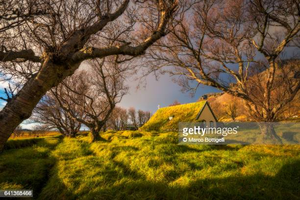 Old church with turf roof seen through the trees' branches. Iceland.