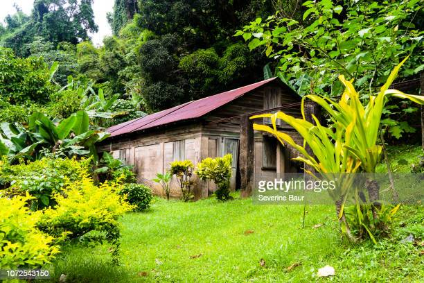 old cocoa dryer in wood charlotteville, tobago, trinidad and tobago, west indies, south america - trinidad and tobago stock pictures, royalty-free photos & images