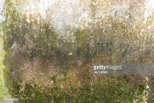 old color gray wall painted background - moss stock pictures, royalty-free photos & images