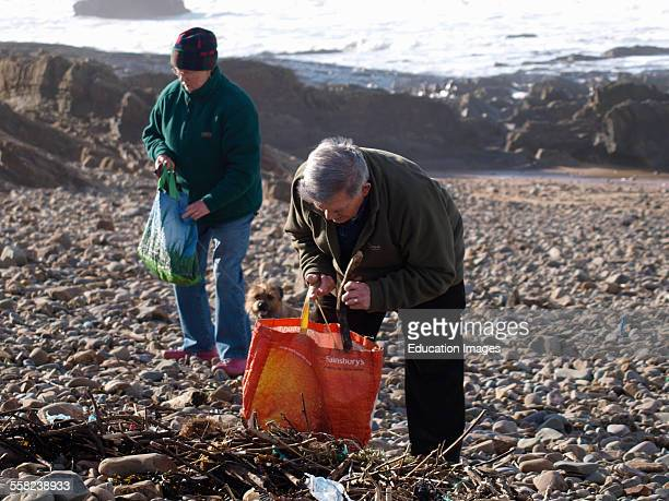 Old couple collecting driftwood for firewood Bude Cornwall