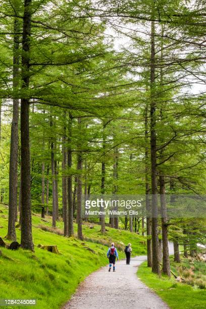 Old couple hiking in a forest at Buttermere Lake, Lake District, Cumbria, England, UK, Europe.