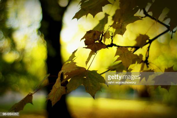 old dark leaves - vahn stock pictures, royalty-free photos & images