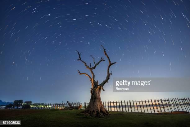 Old dead tree at Taungthaman lake, U-Bein bridge, Mandalay, Myanmar, Asia.