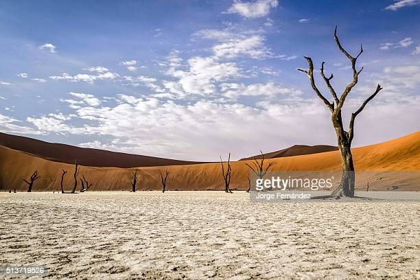Old dead trees standing on a dry lake in front of red dunes of the Namibian desert