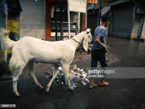 old delhi india - eid al adha stock pictures, royalty-free photos & images