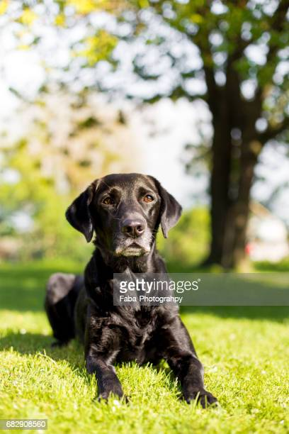 Old Dog outside