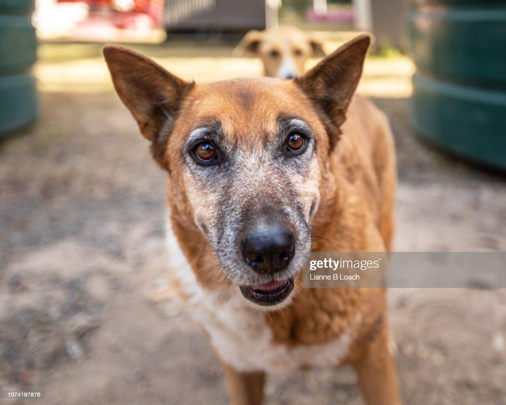 Old dog : Stock Photo