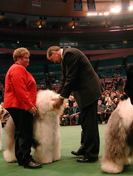 132nd Annual Westminster Kennel Club Dog Show Day 1 Photos And Images Getty Images