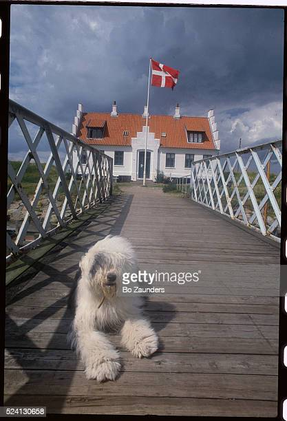 Old English Sheepdog Resting Outside Museum