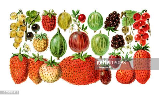 old engraved illustration of a berry fruits varieties - old fashioned stock pictures, royalty-free photos & images