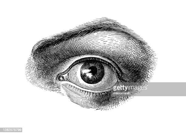 old engraved illustration of anatomy of the human eye - biomedical illustration stock pictures, royalty-free photos & images