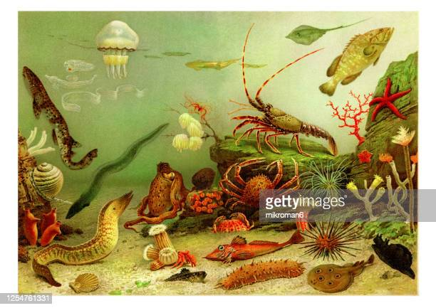 old engraved illustration of aquarium - coral sea stock pictures, royalty-free photos & images