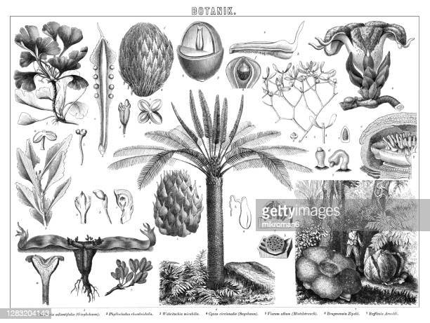 old engraved illustration of botany - blossom stock pictures, royalty-free photos & images