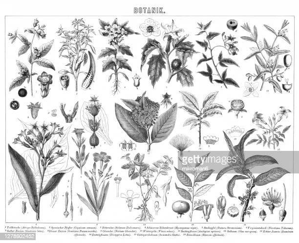 old engraved illustration of plants, botany - horticulture stock pictures, royalty-free photos & images