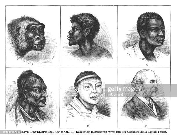 old engraved illustration of progressive development of man - evolution illustrated with the six corresponding living forms - monkey man stock pictures, royalty-free photos & images