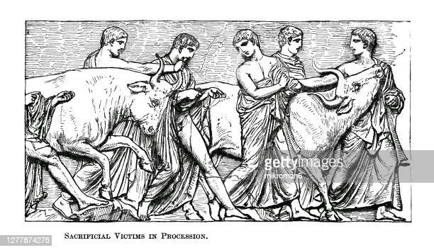 old engraved illustration of sacrificial victims in procession, panathenaic procession - 犠牲プレイ ストックフォトと画像