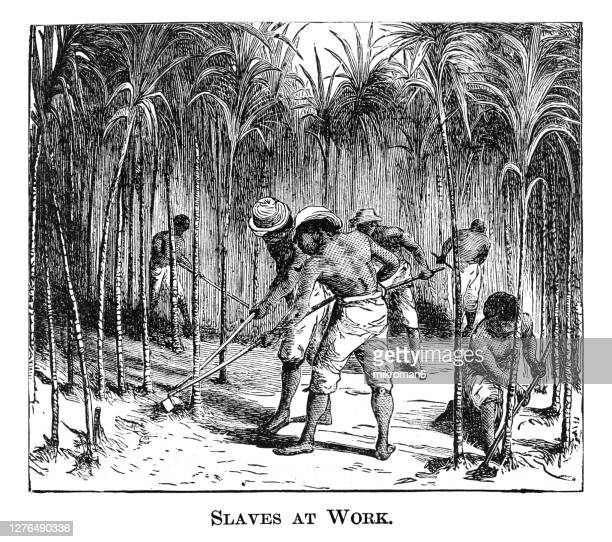 old engraved illustration of slaves at work - slavery stock pictures, royalty-free photos & images