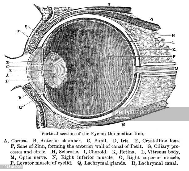 old engraved illustration of vertical section of the eye, popular encyclopedia published 1894 - history stock pictures, royalty-free photos & images