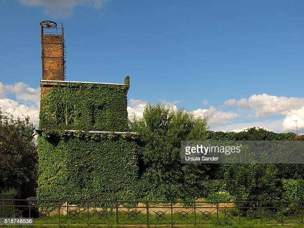 Old factory vegetated with ivy, Storkow, Brandenburg, Germany