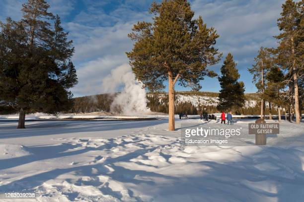 Old Faithful Geyser in the Winter at Yellowstone National Park Wyoming