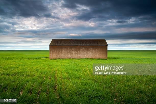 Old farm shed in green wheat field, Australia