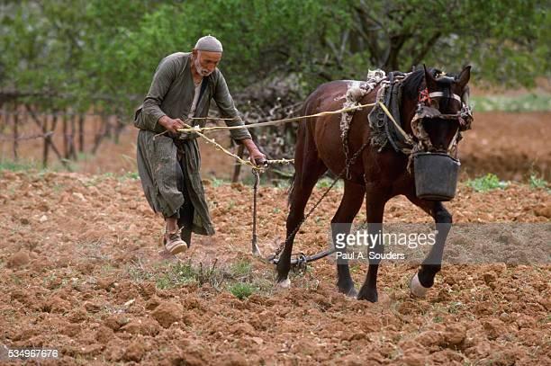 Old Farmer Plowing Field