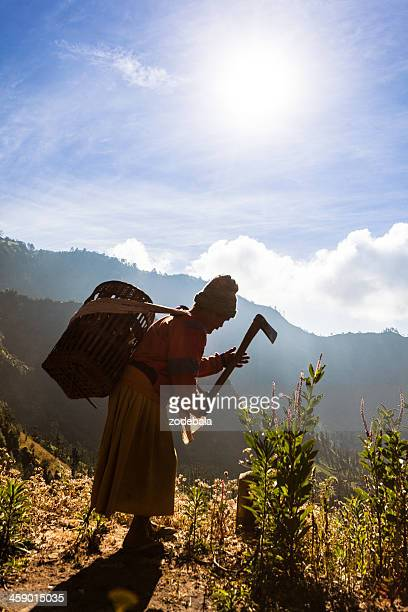 old farmer woman working with a hoe in indonesia - bromo tengger semeru national park stock photos and pictures