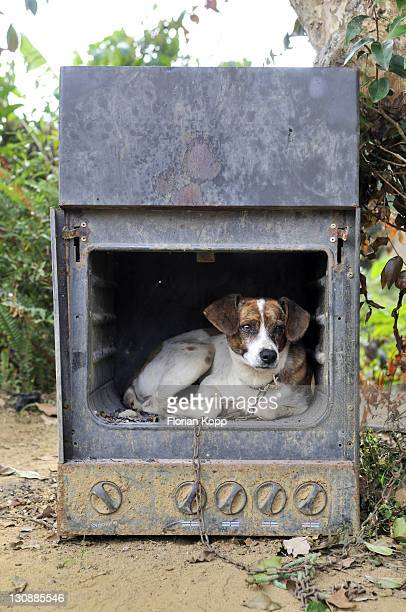 Old gas stove with a dog as a doghouse, Brazil, South America