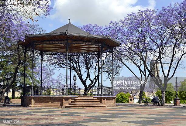 Old gazebo surrounded by flowering jacarandas