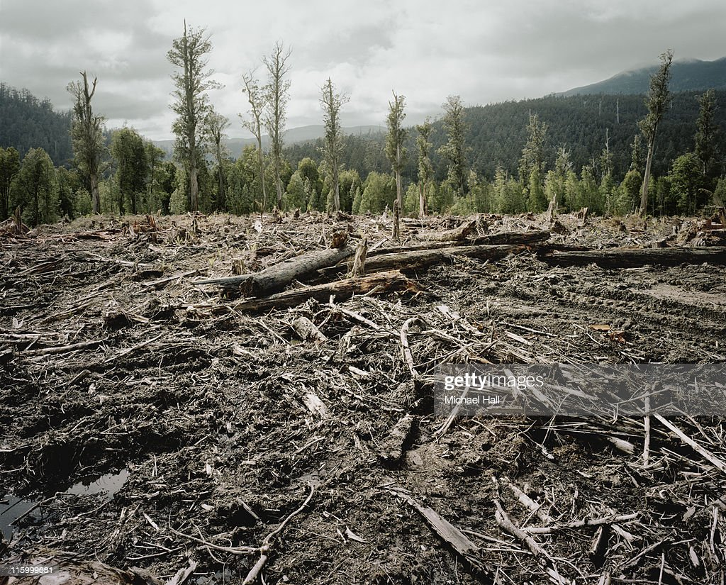 Old Growth Deforestation Tasmania : Stock Photo