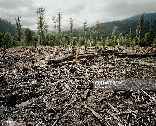old growth deforestation tasmania - destruction stock pictures, royalty-free photos & images