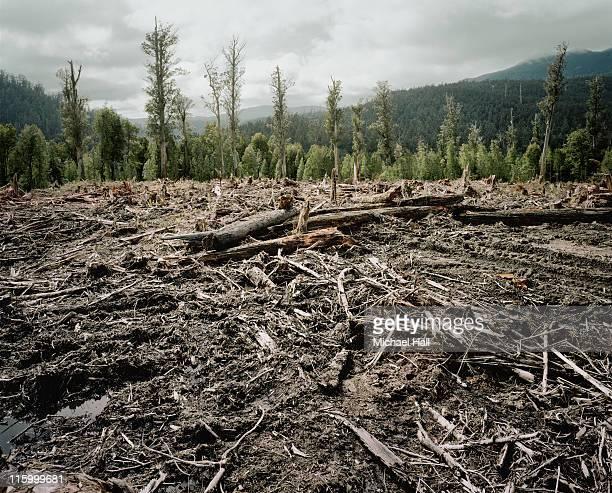 Old Growth Deforestation Tasmania