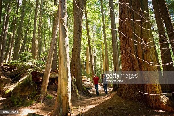 escursione di crescita - foresta temperata foto e immagini stock