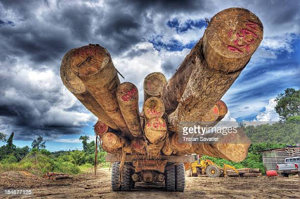 CONTENT] Old growth rain forest is cut and logged to make room for oilpalm plantations logging tropical rain forest clouds cloudy cloudy sky...