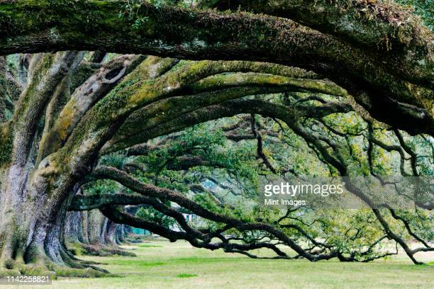 old growth trees - rock overhang stock pictures, royalty-free photos & images