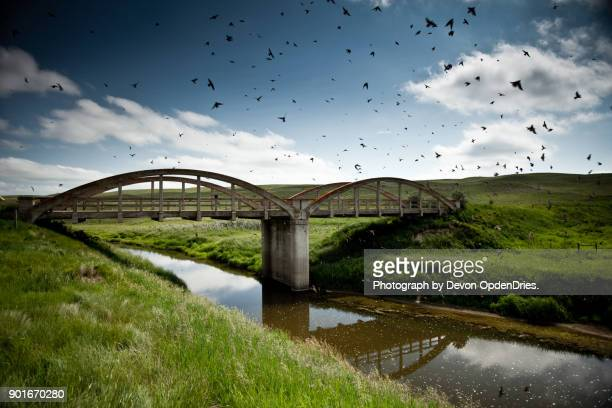old highway bridge with birds - saskatchewan stock pictures, royalty-free photos & images