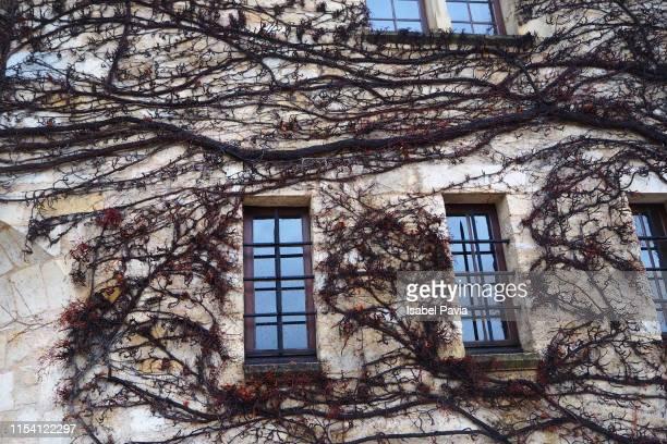 old house facade with climbing plant, aquitaine, france - ベルジュラック ストックフォトと画像