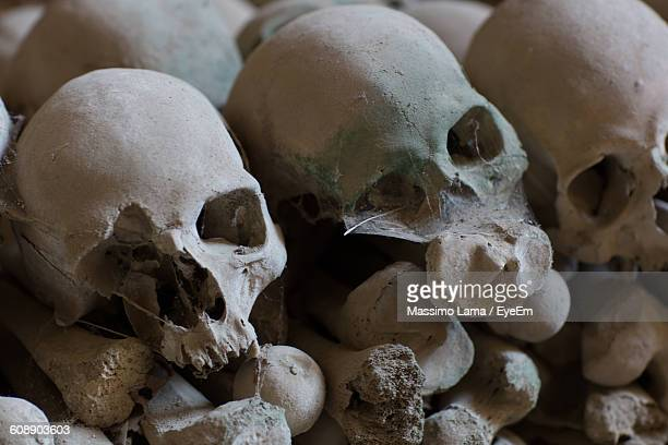 Old Human Skulls In Cemetery