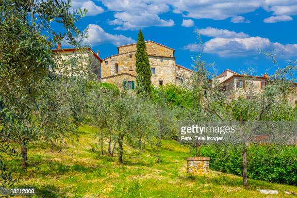 old italian town with olive trees in the foreground - san quirico d'orcia stock pictures, royalty-free photos & images