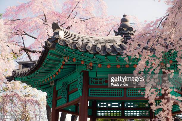 old korean style pavilion in cherry blossom garden in namsan park in seoul city, south korea - korean stock pictures, royalty-free photos & images