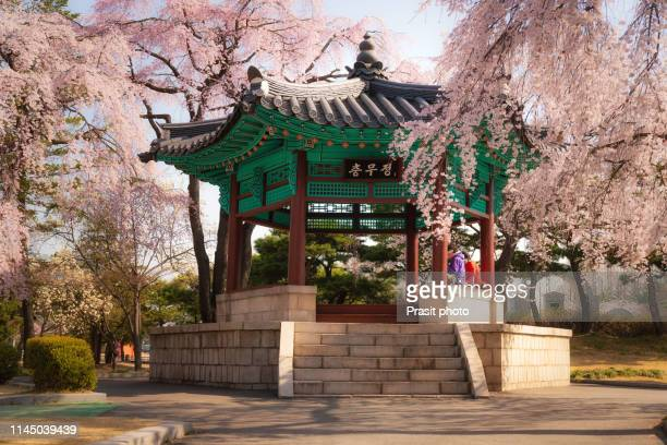 old korean style pavilion in cherry blossom garden in seoul city, south korea - holy city park stock pictures, royalty-free photos & images