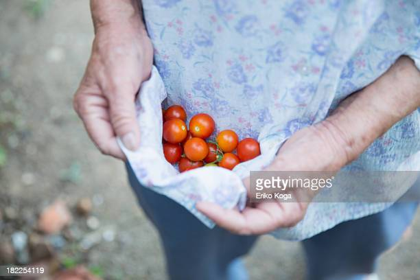 old lady holding cherry tomato - one senior woman only stock pictures, royalty-free photos & images