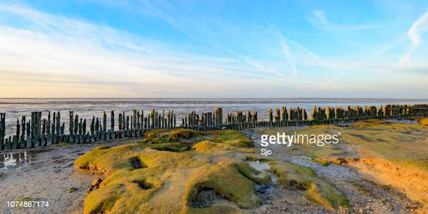 Old land reclamation poles on the tidal flats during sunset