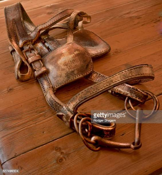 Old leather horse harness
